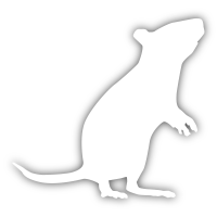 Logo for Joe the rat
